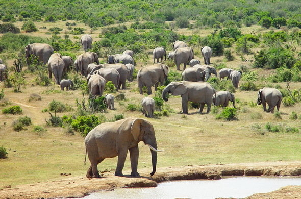 Addo Elephant National Park Cape Town South Africa